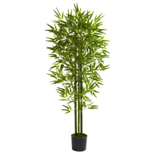 bamboo-tree-indoor-plant-indoor-bamboo-plant-care-3438530aa8821423