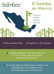 Bambú en México